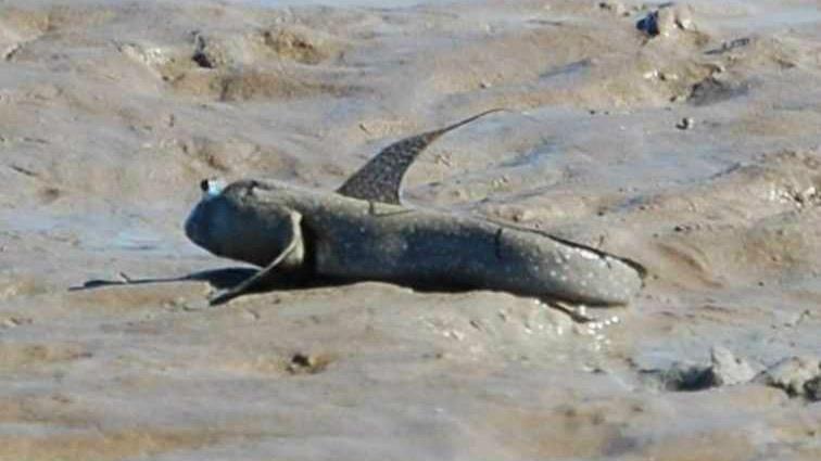 Земные создания, способные к выживанию в самых экстремальных условиях (8 фото)