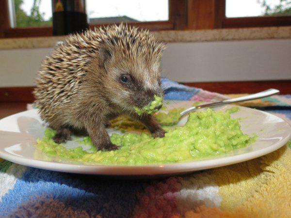 Прикольные фото с участием животных (35 фото)