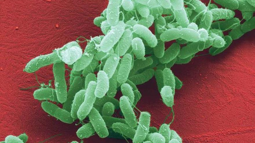 Самые опасные болезни в истории человечества (11 фото)