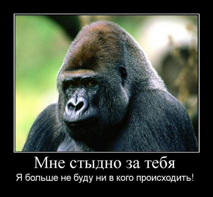 Подборка демотиваторов 23.04.2015 (26 картинок)