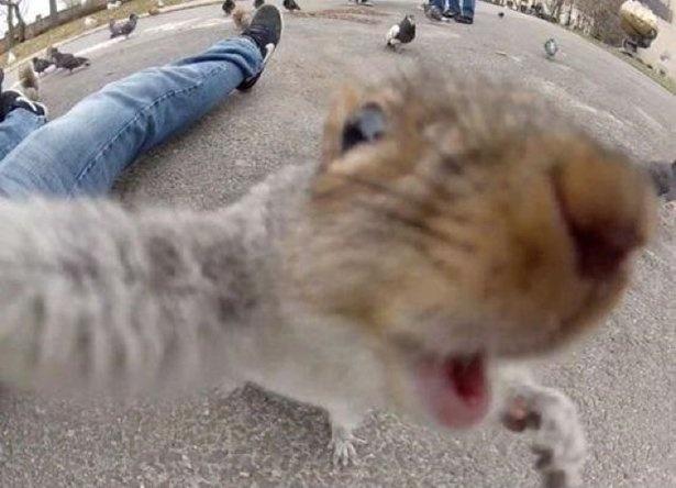 Смешные селфи животных (30 фото)