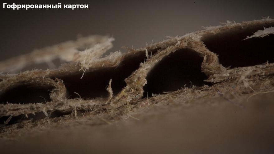 Непривычный взгляд на обычные вещи с помощью макросъемки (18 фото)
