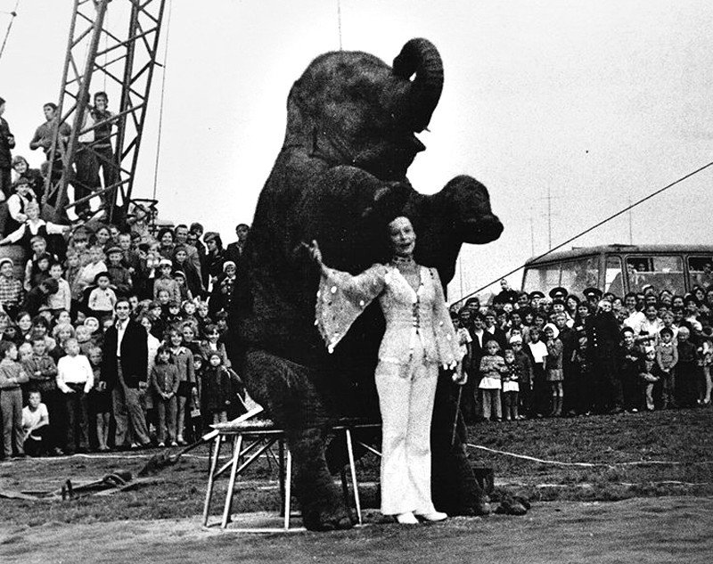 Девушки на арене цирка (20 фото)