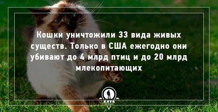 Любопытные факты о кошках и семействе кошачьих (10 картинок)
