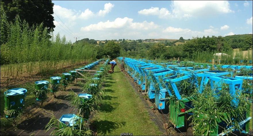 Мебель, выращиваемая в поле (11фото)