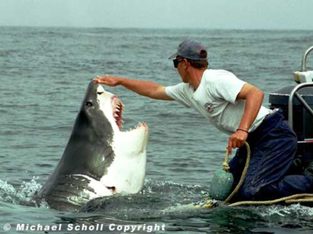 Последствия необычной дружбы рыбака и акулы (7 фото)