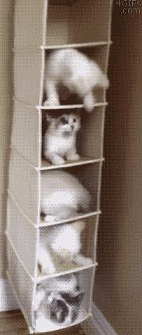 Смешные гифки с участием котов (12 гифок)