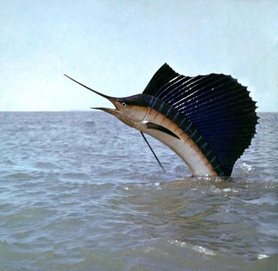 Удивительные факты о рыбах (10 фото)