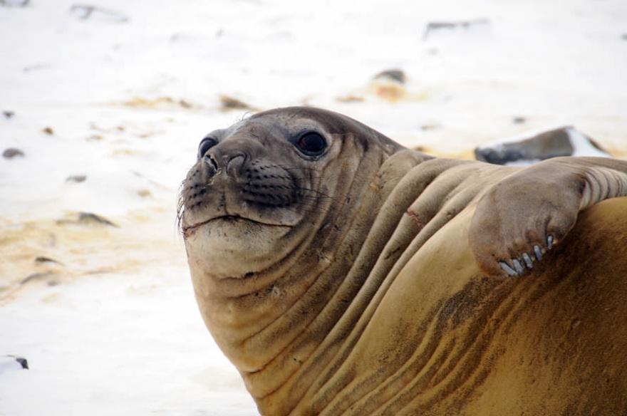 Интересные факты из жизни животного мира (11 фото)