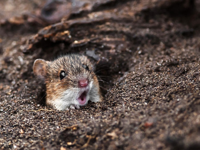 55 фотографий шокированных и удивленных животных