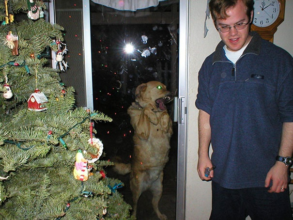 Коты и другие животные, пытающиеся попасть в дом (79 фото)