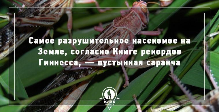 10 интересных фактов о живой природе