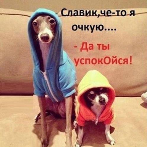 Подборка прикольных картинок 10.05.2015 (35 фото)