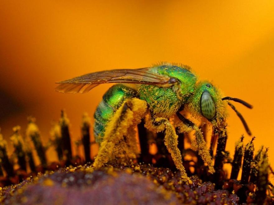 Рейтинг насекомых с болезненным укусом (10 фото)