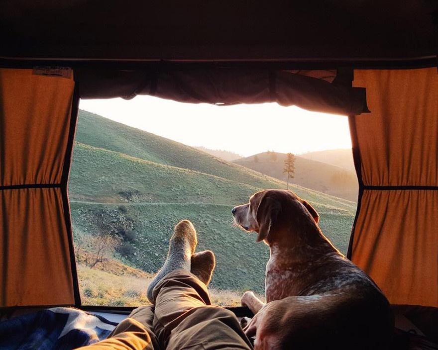 Будни собаки-путешественницы (21 фото)