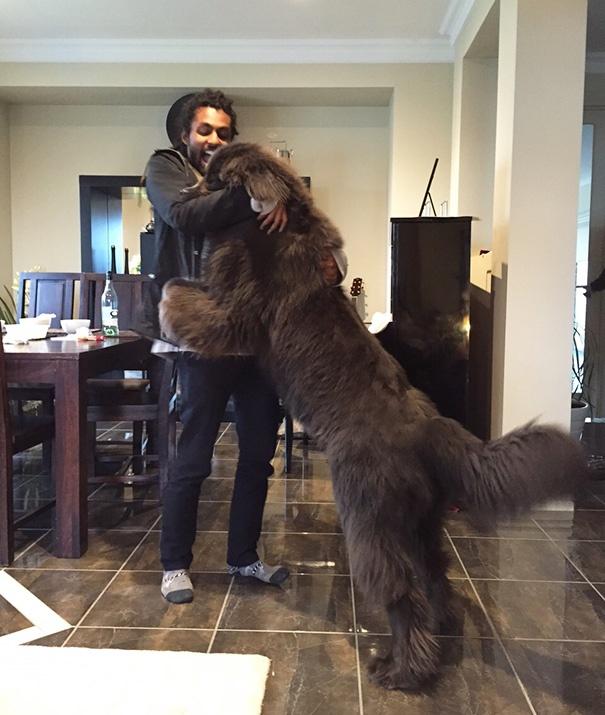 20 огромных собак-друзей человека