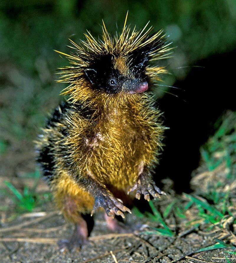 10 очень необычных живых существ (12 фото)