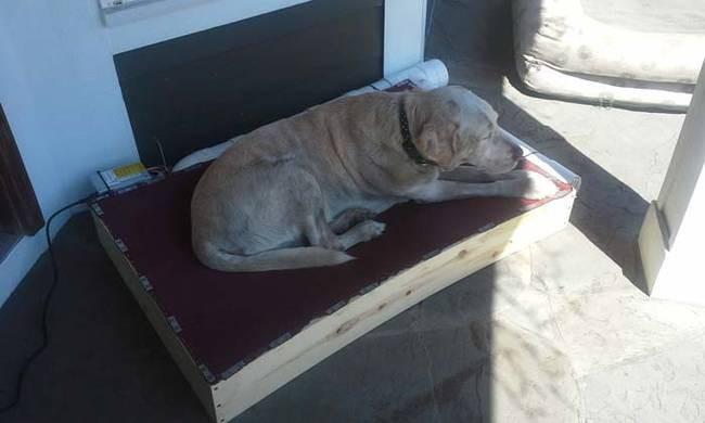 Необычный лежак для собаки (8 фото)