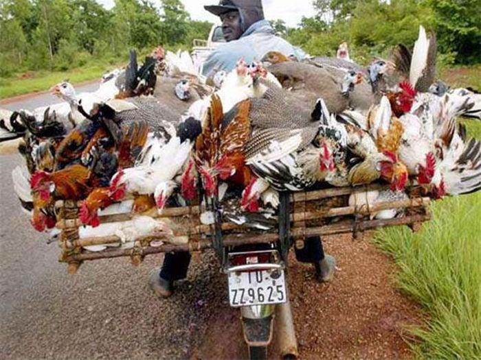 Сверхвозможности мотоциклов и мопедов при перевозке грузов (26 фото)