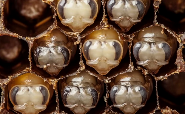 Появление пчел на свет