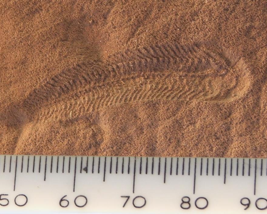 Живые существа,обитавшие на Земле сотни тысяч лет назад (13 фото)