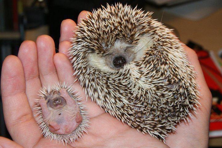 20 фото детенышей различных животных