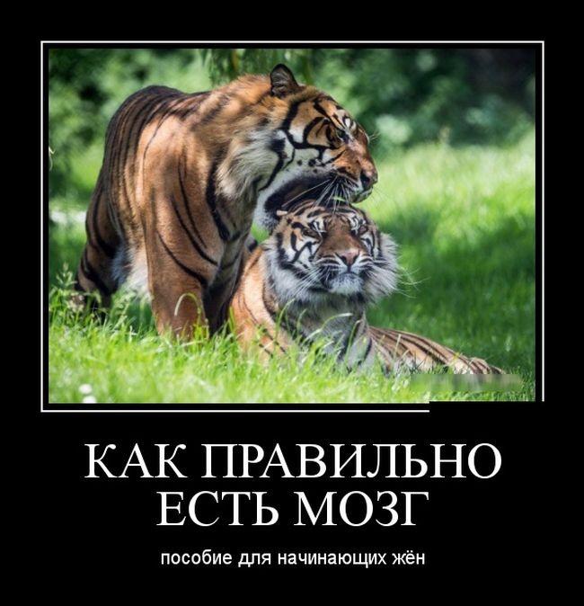 Подборка забавных демотиваторов 27.05.2015 (27 фото)