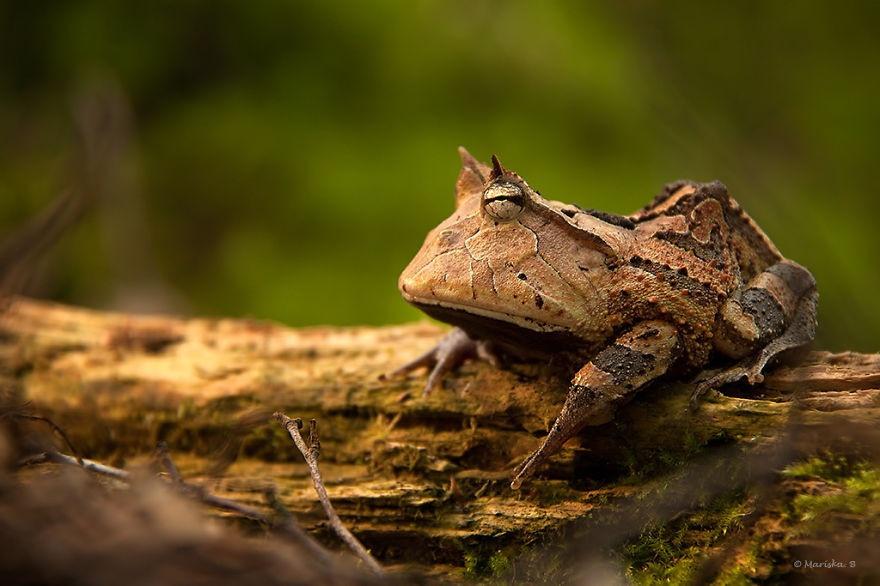 Самые необычные лягушки со всего мира (30 фото)