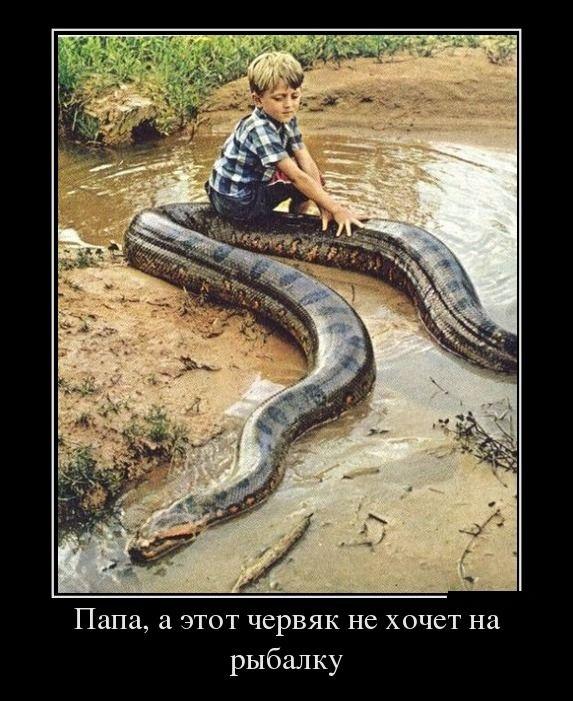 Подборка забавных демотиваторов 02.06.2015 (25 картинок)