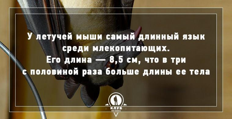 10 интересных фактов 05.06.2015 (10 картинок)