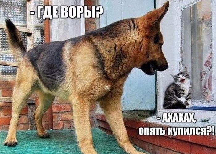 Подборка прикольных картинок 05.06.2015 (90 фото)