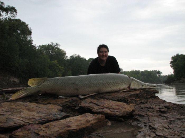 Огромная рыба-аллигатор (16 фото)