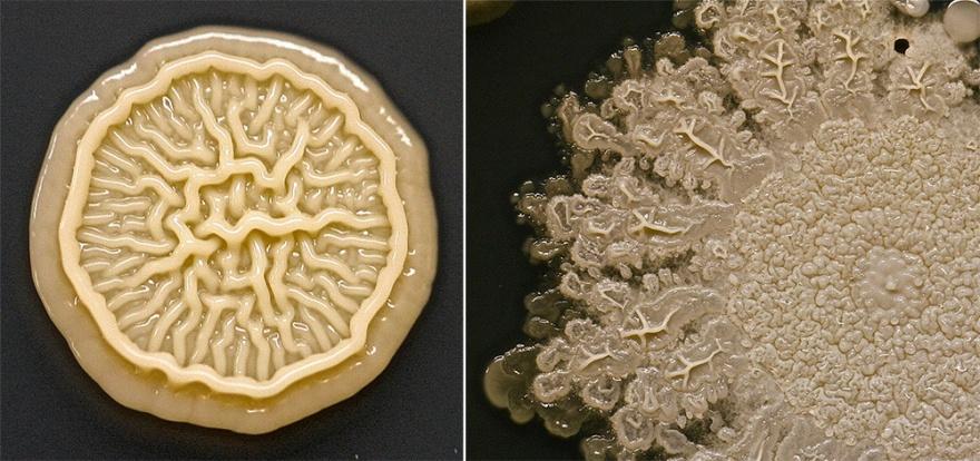 Бактерии на наших руках (2 фото)