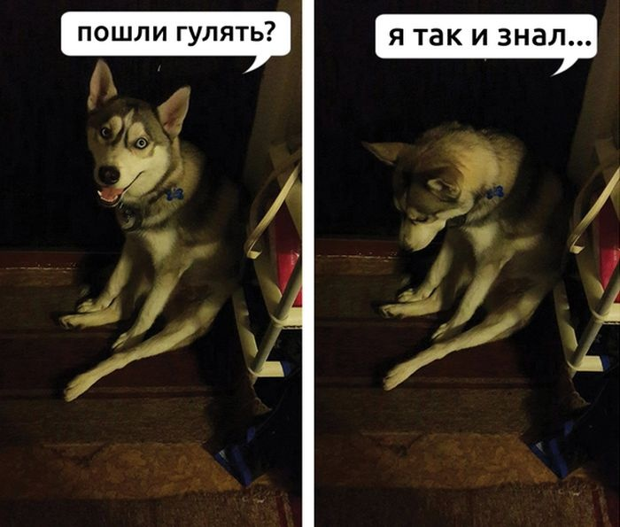Подборка прикольных картинок 09.06.2015 (91 картинка)