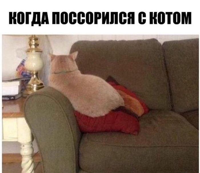 Подборка прикольных картинок 11.06.2015 (89 фото)