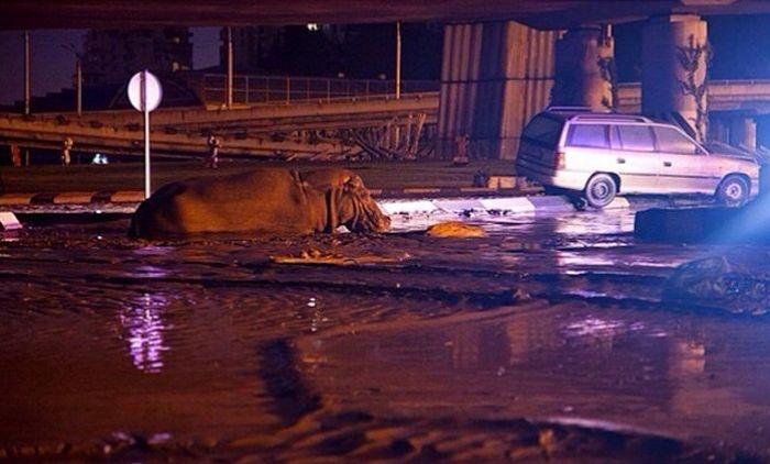 Дикие животные на улицах Тбилиси (16 фото)