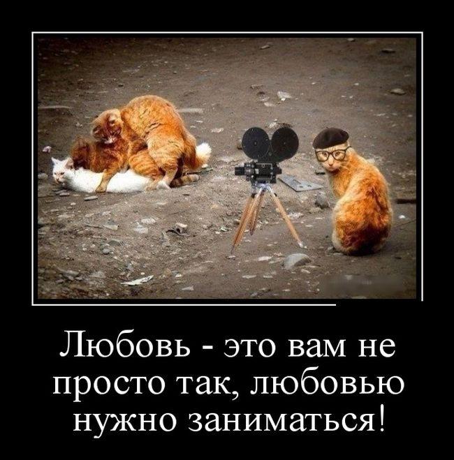 Подборка забавных демотиваторов 16.06.2015 (22 картинки)