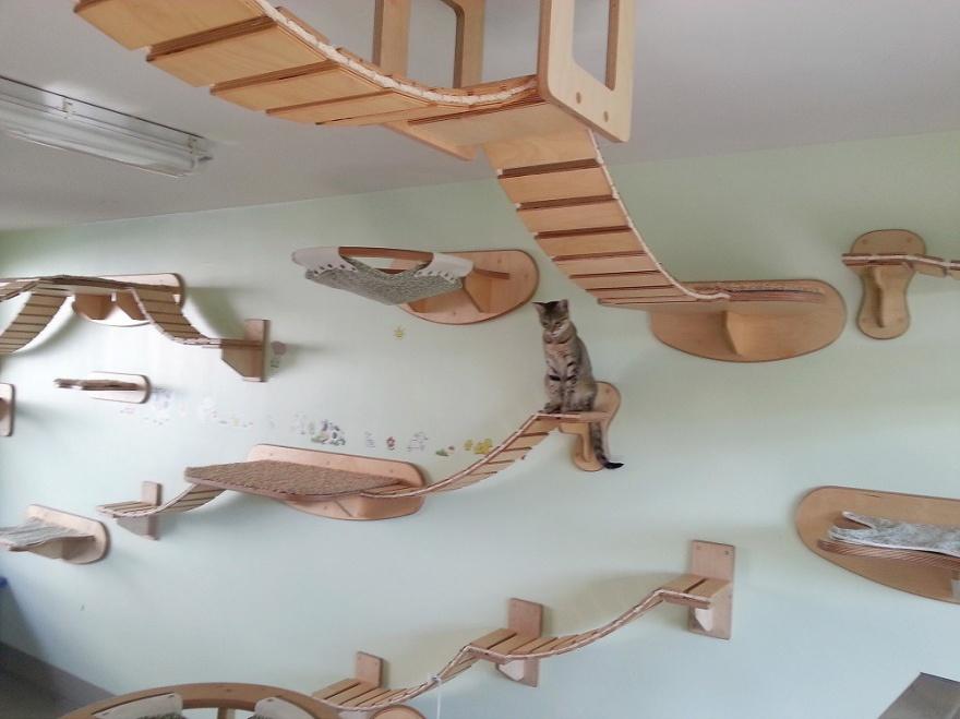 Дизайн-студия, специализирующаяся на создании игровых площадок для кошек (13 фото)