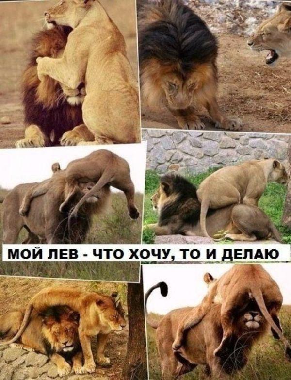 Подборка прикольных картинок 18.06.2015 (86 картинок)