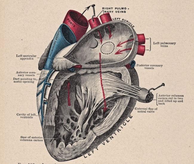 20 интересных фактов о человеческом теле (5 фото)