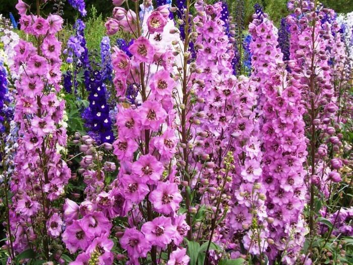 Красивые и опасные цветы (15 фото)