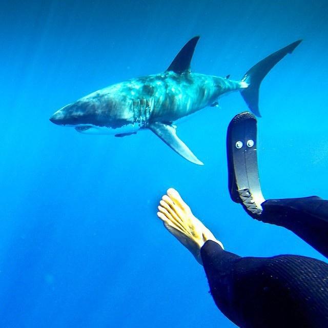 Жизнь акул