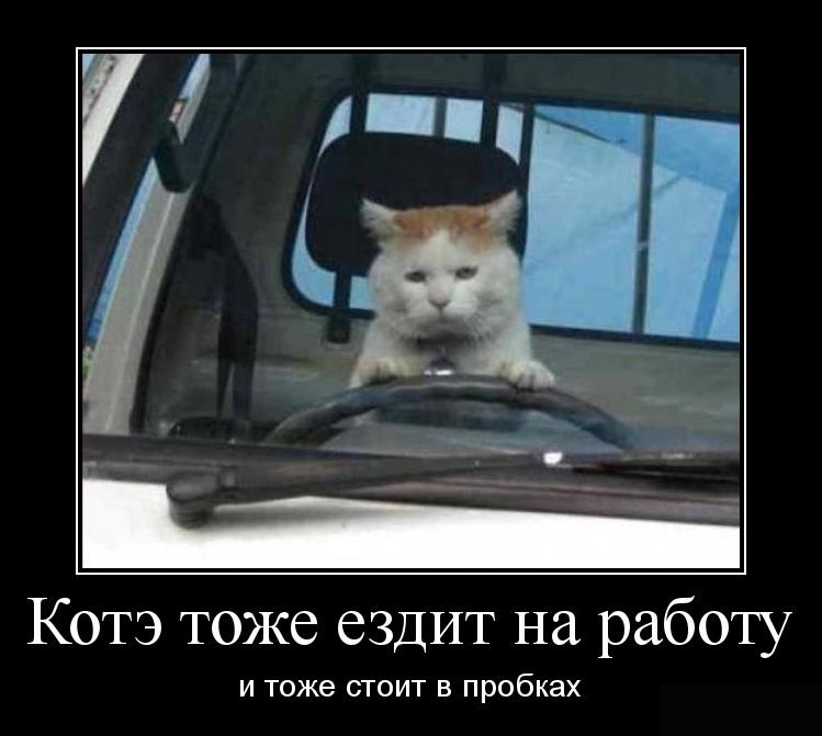 Лучшие демотиваторы о котах (15 фото)