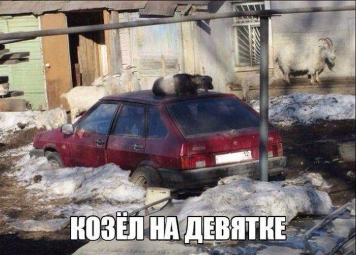 Автоюмор (40 фото)