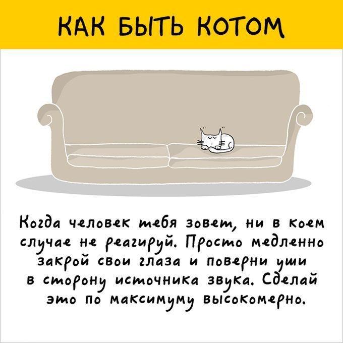 Узнайте, как это быть котом