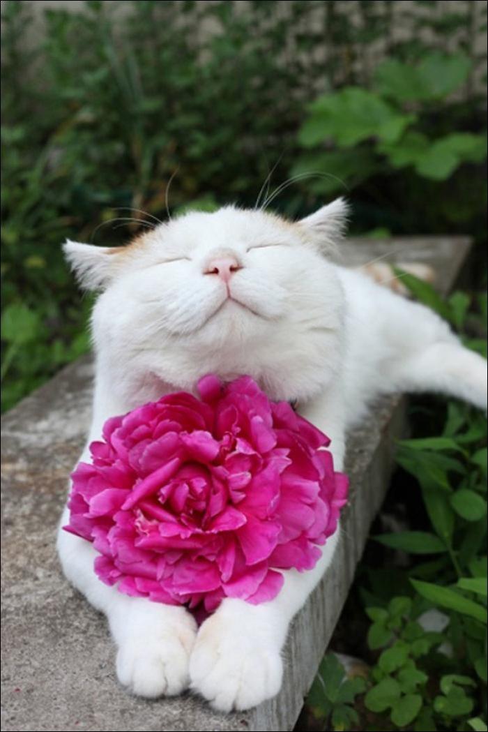 Веселые котики (15 фото)