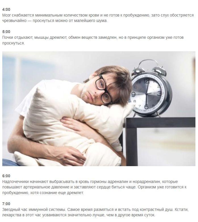 Ты спишь, а организм работает