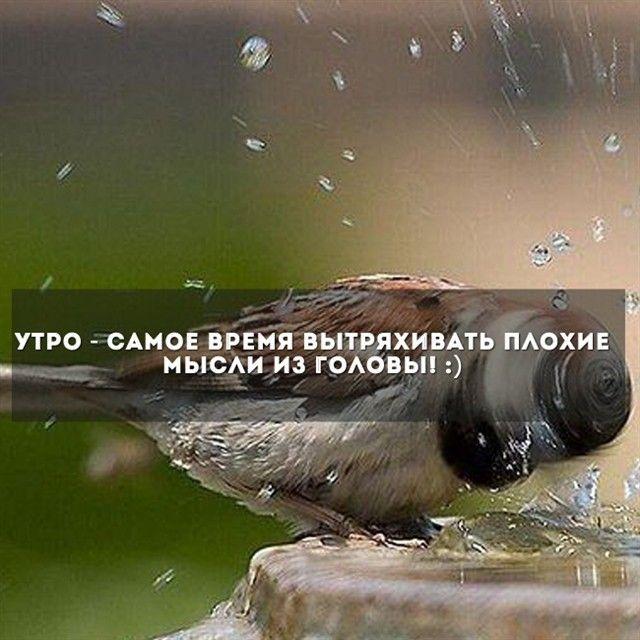 Подборка прикольных картинок (93 фото)