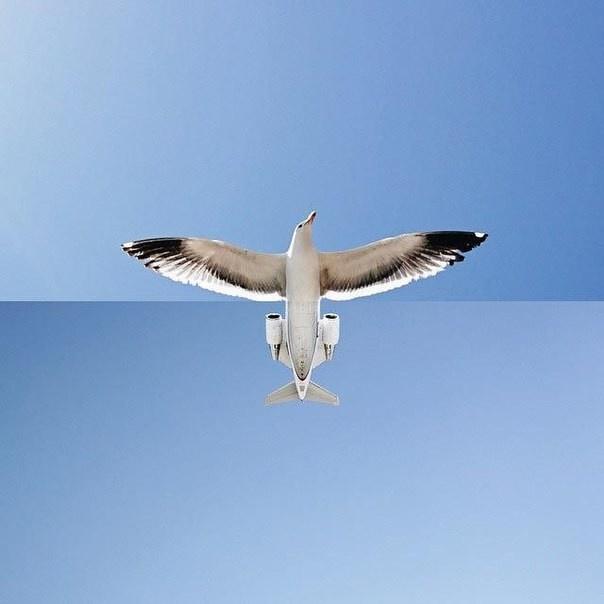Необычная комбинация картинок