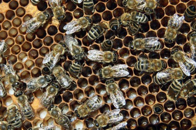 Что если не будет пчел?